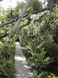 Dschungel Tulum