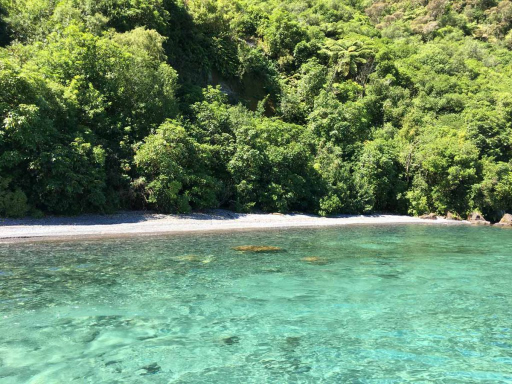 Beach Lake Taupo New Zealand