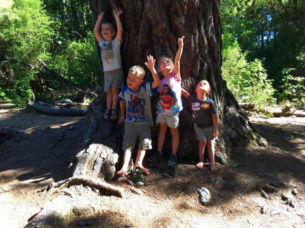 taupo bush walk big tree