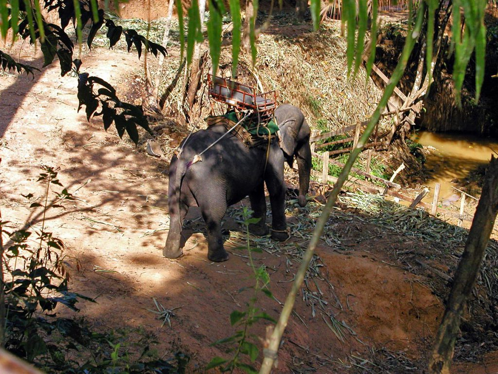 Elephant Camp in Khao Sok Thailand