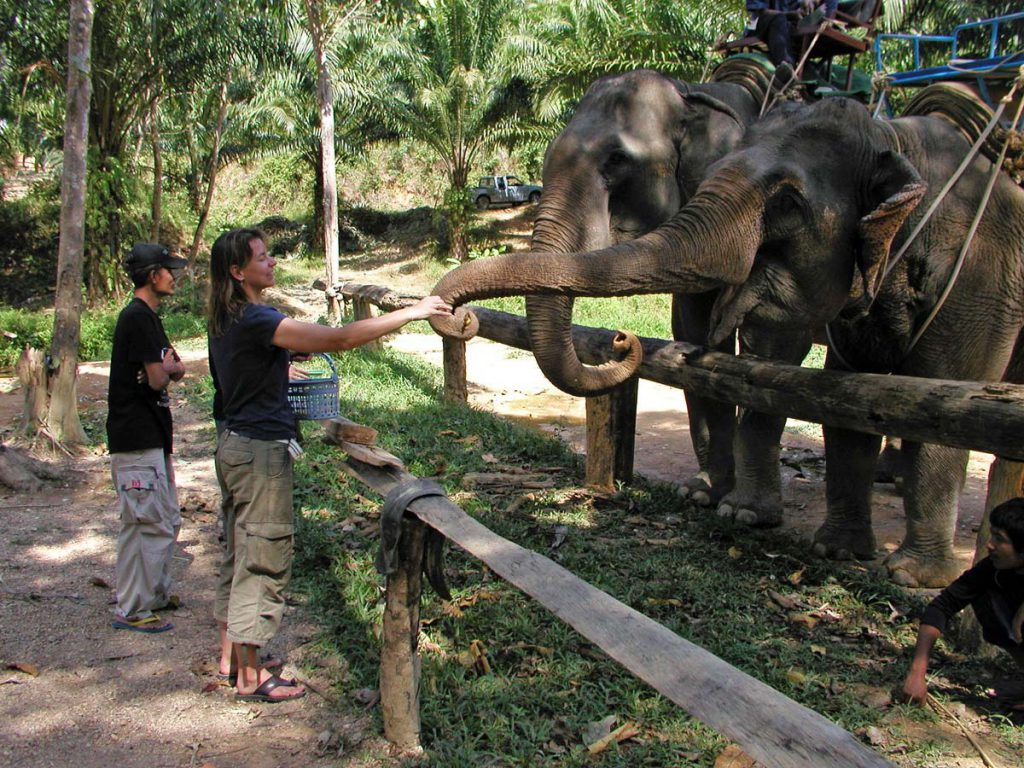 Feeding the Elephants in Khao Sok