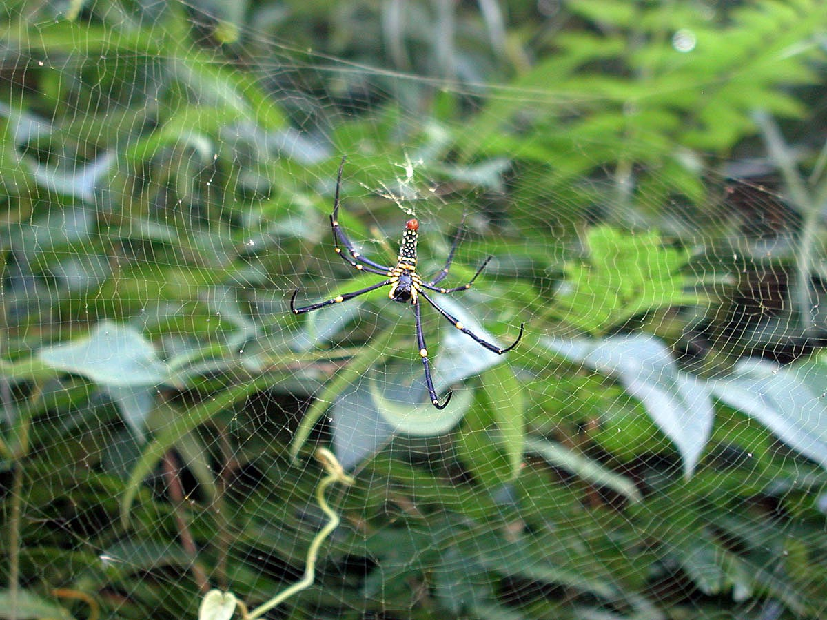 Interesting Spider in Khao Sok National Park Thailand